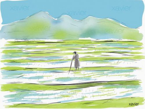 culture du riz au japon, rizière, paysage, voyager japon, japan travel