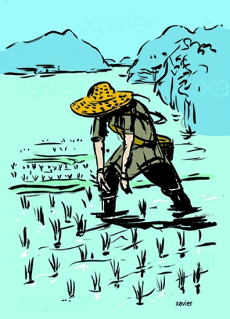 Woman cultivating pricking rice rice field edge the Sea of Japan femme cultivant piquage riz rizière bord mer du japon xavier